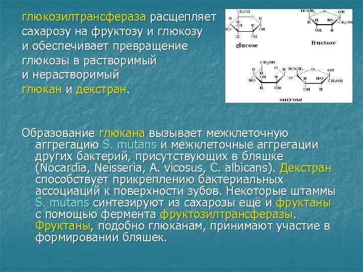 глюкозилтрансфераза расщепляет сахарозу на фруктозу и глюкозу и обеспечивает превращение глюкозы в растворимый и