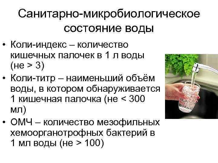 Санитарно-микробиологическое  состояние воды • Коли-индекс – количество  кишечных палочек в