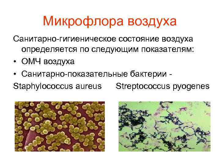 Микрофлора воздуха Санитарно-гигиеническое состояние воздуха  определяется по следующим показателям:  • ОМЧ
