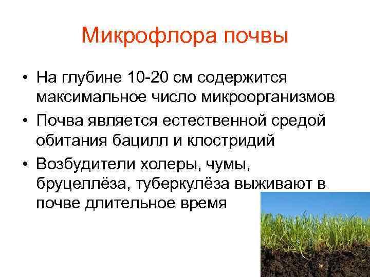 Микрофлора почвы • На глубине 10 -20 см содержится  максимальное число микроорганизмов