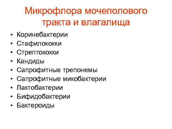 Микрофлора мочеполового   тракта и влагалища •  Коринебактерии •  Стафилококки