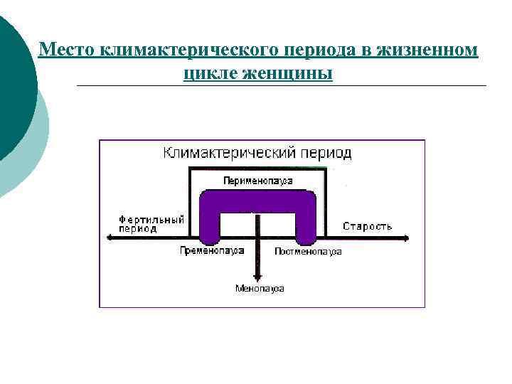 Место климактерического периода в жизненном    цикле женщины