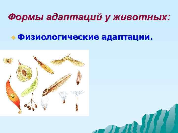 Формы адаптаций у животных: u Физиологические  адаптации.