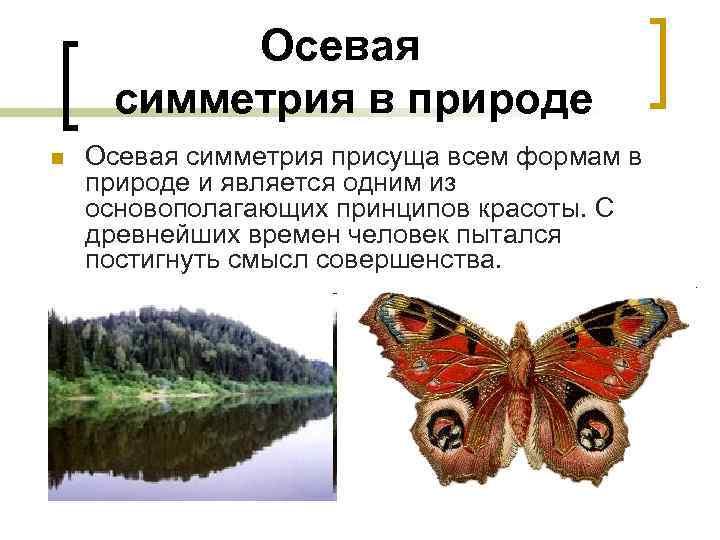 Осевая   симметрия в природе n  Осевая симметрия присуща