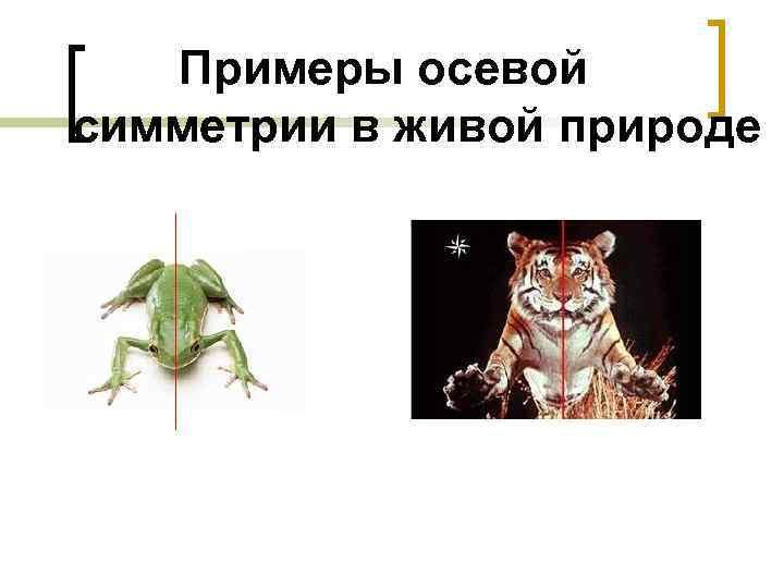 Примеры осевой симметрии в живой природе