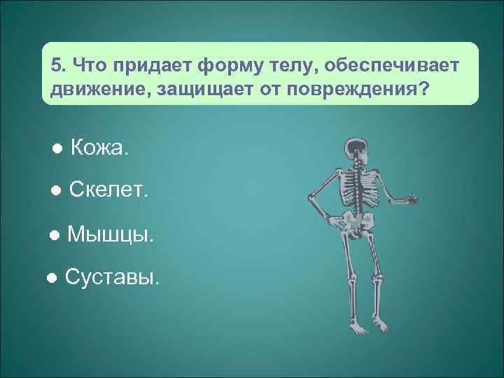 5. Что придает форму телу, обеспечивает движение, защищает от повреждения?  l  Кожа.
