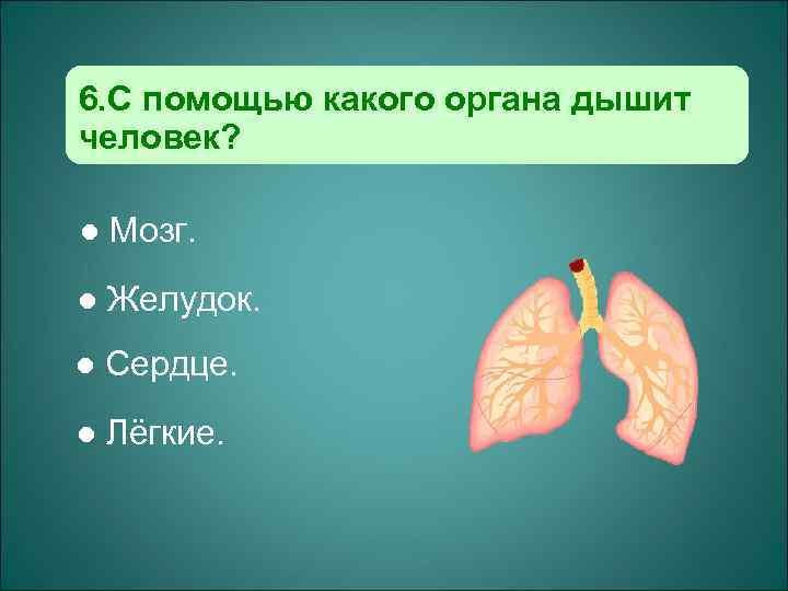 6. С помощью какого органа дышит человек?  l  Мозг. l  Желудок.