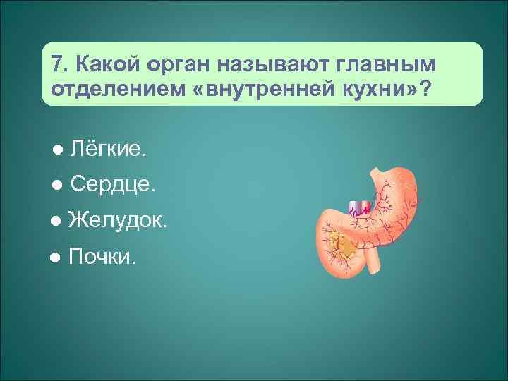 7. Какой орган называют главным отделением «внутренней кухни» ?  l  Лёгкие. l
