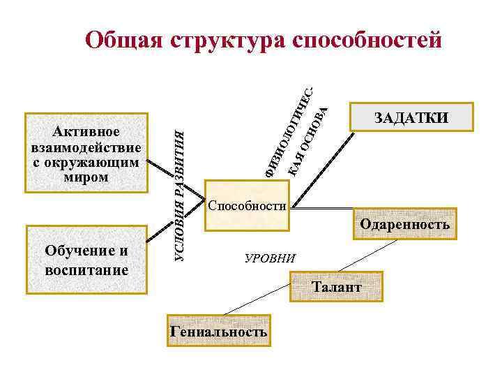 Общая структура способностей      -