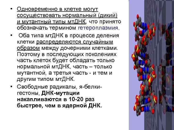 • Одновременно в клетке могут  сосуществовать нормальный (дикий)  и мутантный типы