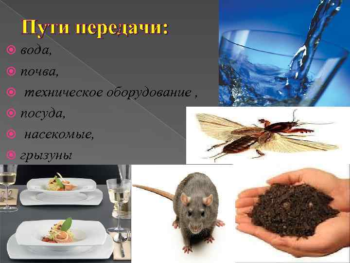 Пути передачи:  вода,  почва,  техническое оборудование ,  посуда,