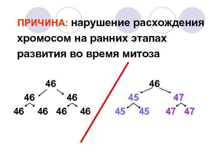 ПРИЧИНА: нарушение расхождения хромосом на ранних этапах развития во время митоза 46  46