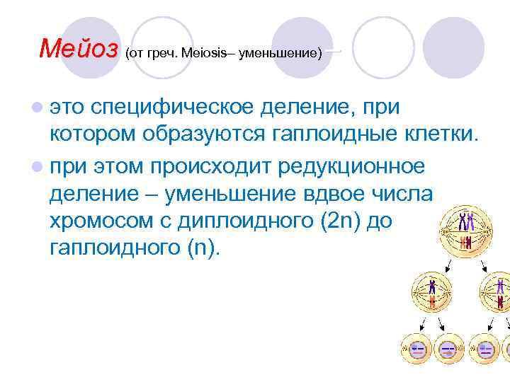 Мейоз (от греч. Meiosis– уменьшение) – l это специфическое деление, при  котором образуются