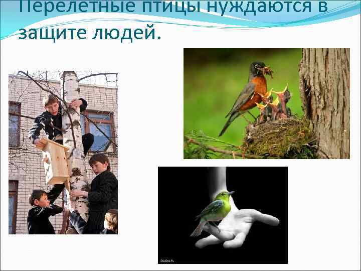 Перелетные птицы нуждаются в защите людей.