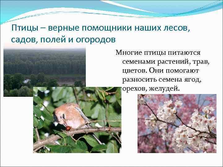 Птицы – верные помощники наших лесов, садов, полей и огородов