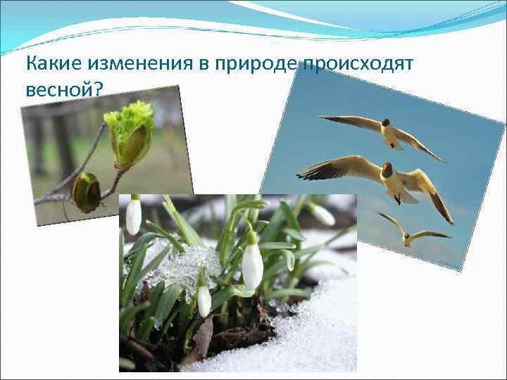 Какие изменения в природе происходят весной?