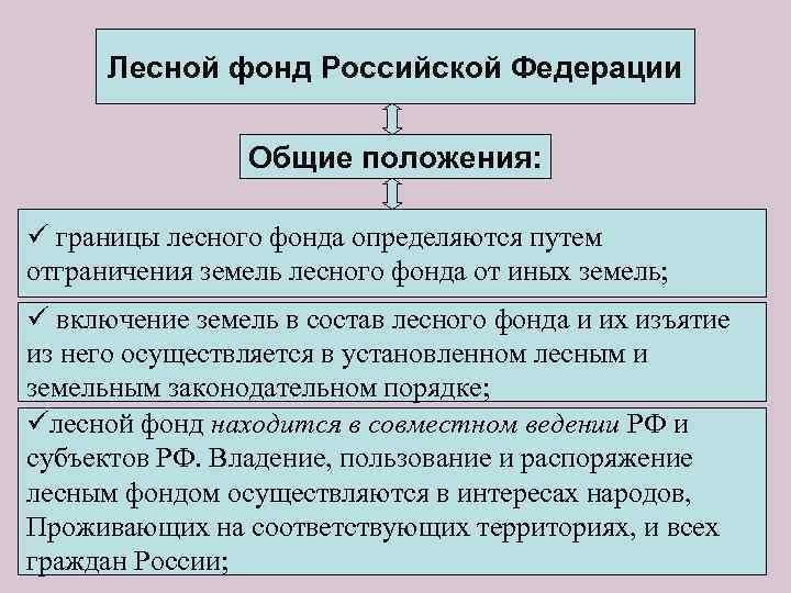 Лесной фонд Российской Федерации Общие положения: ü границы лесного фонда определяются путем отграничения земель