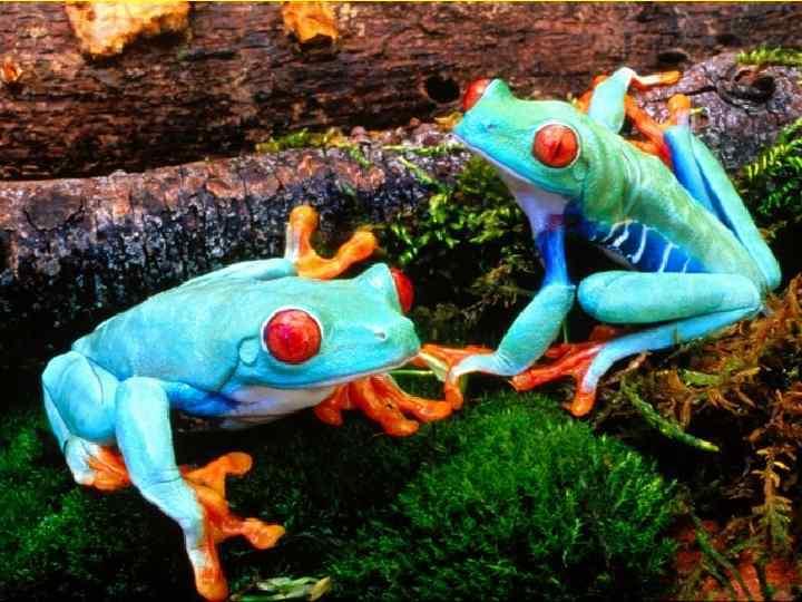 • Например, лягушки устанавливали  правильное направление пути, видя  только Солнце, даже