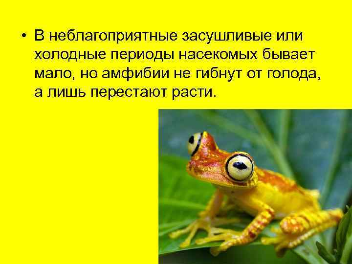 • В неблагоприятные засушливые или  холодные периоды насекомых бывает  мало, но
