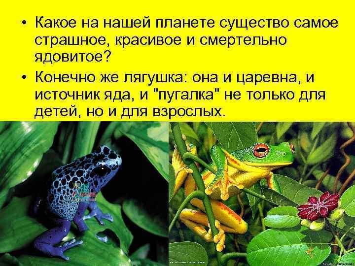 • Какое на нашей планете существо самое  страшное, красивое и смертельно
