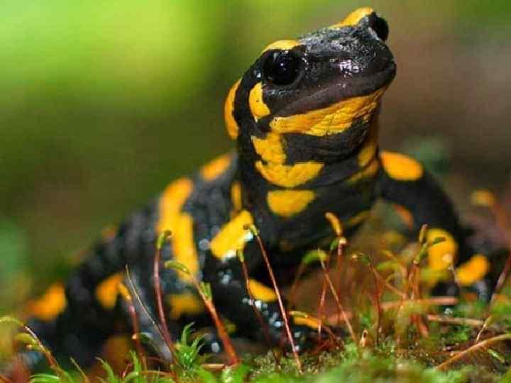 •  В яйцах саламандр живут водоросли. Зачем?  •  Чтобы питать