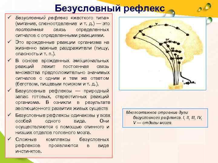 Безусловный рефлекс ü Безусловный рефлекс  «жесткого типа» (мигание, слюноотделение