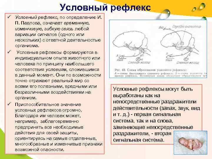 Условный рефлекс ü Условный рефлекс, по определению И. П.