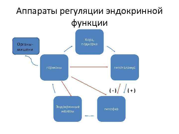 Аппараты регуляции эндокринной  функции      Кора, Органы-