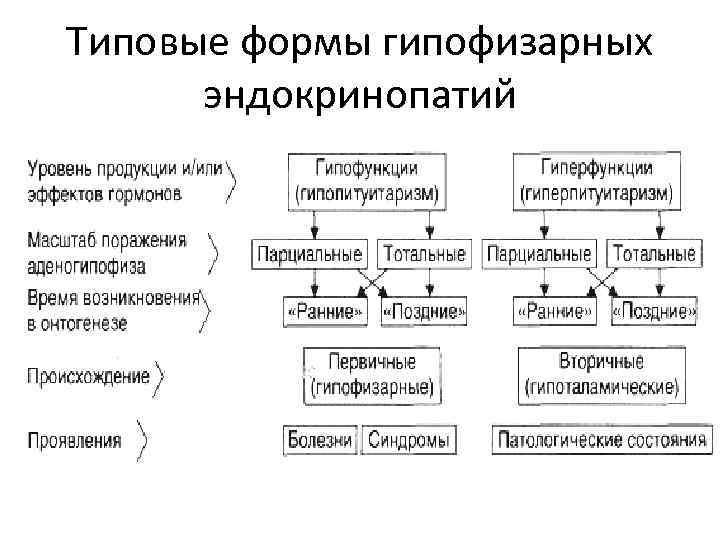 Типовые формы гипофизарных  эндокринопатий