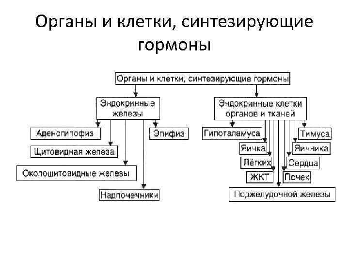 Органы и клетки, синтезирующие  гормоны