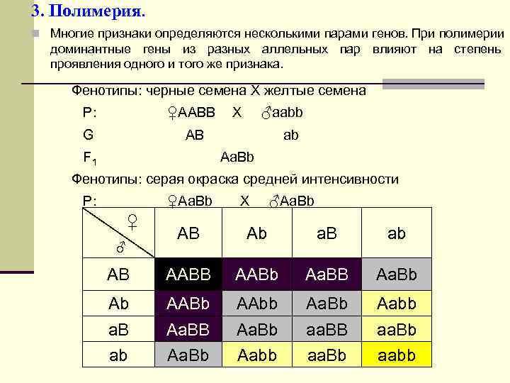 3. Полимерия. n Многие признаки определяются несколькими парами генов. При полимерии  доминантные гены