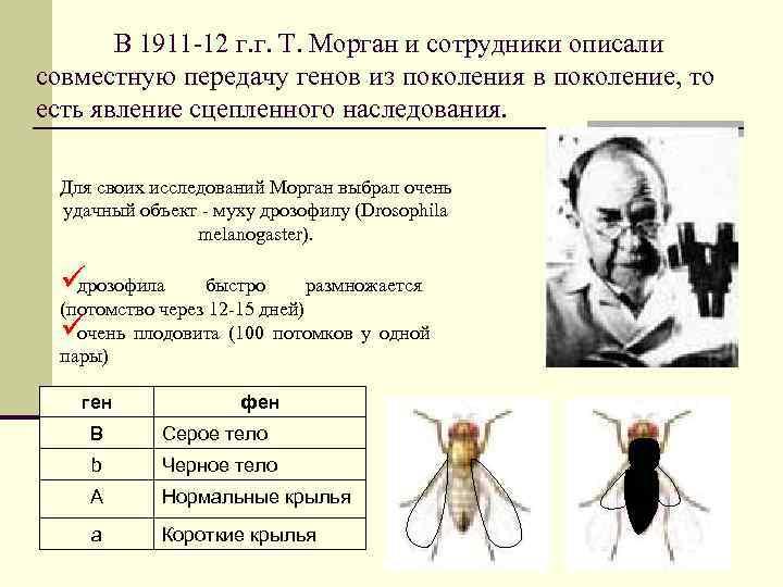 В 1911 -12 г. г. Т. Морган и сотрудники описали совместную передачу