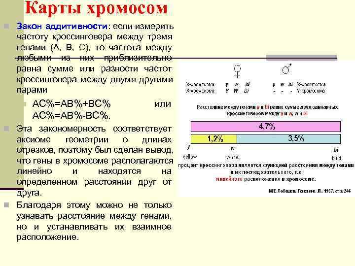 Карты хромосом n Закон аддитивности: если измерить частоту кроссинговера между тремя генами