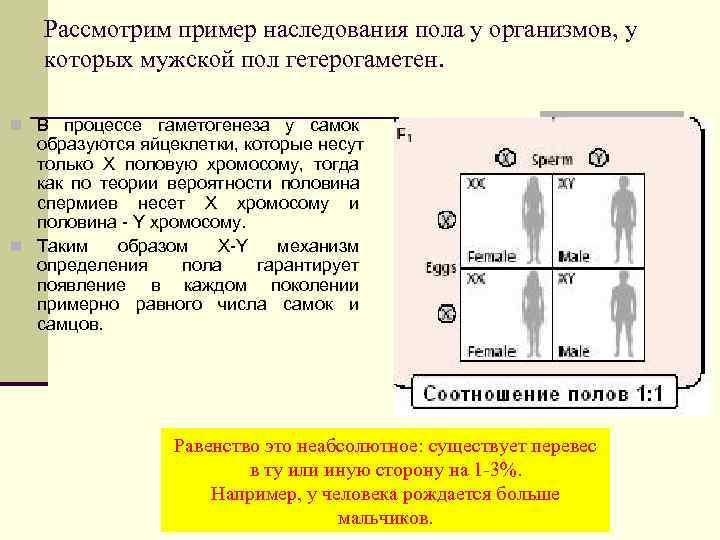 Рассмотрим пример наследования пола у организмов, у  которых мужской пол гетерогаметен.