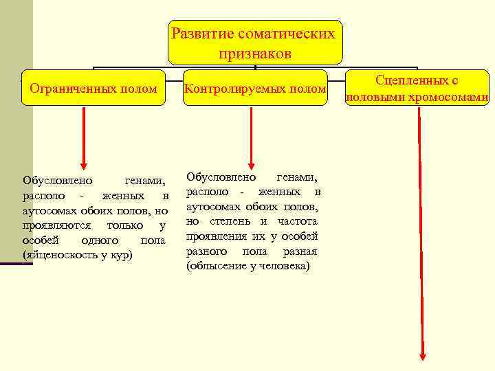 Развитие соматических      признаков