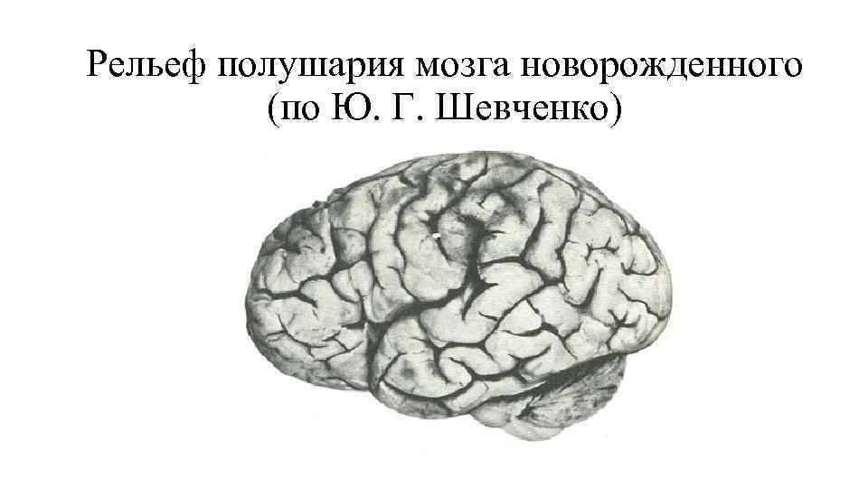 Рельеф полушария мозга новорожденного  (по Ю. Г. Шевченко)