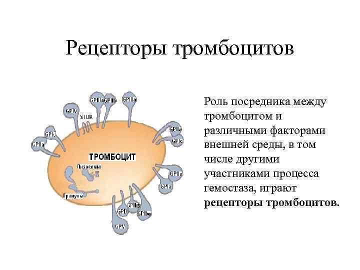 Рецепторы тромбоцитов   Роль посредника между   тромбоцитом и   различными