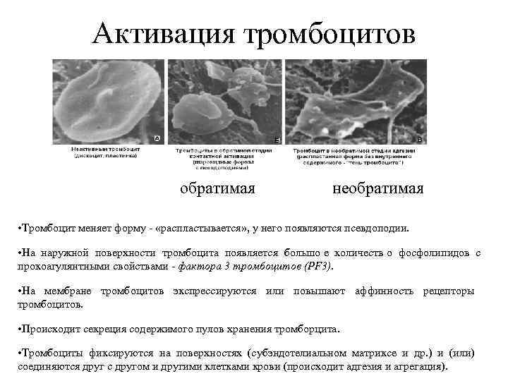 Активация тромбоцитов      обратимая