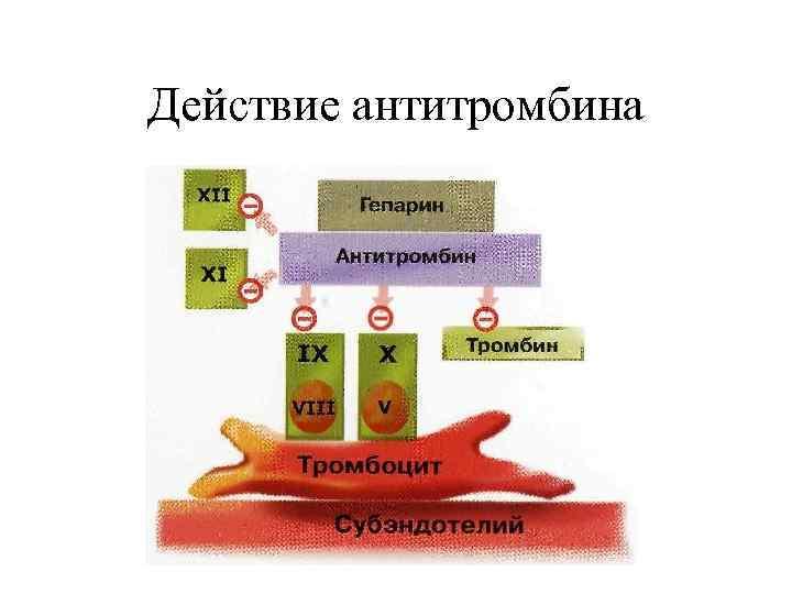 Действие антитромбина