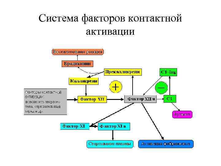 Система факторов контактной  активации