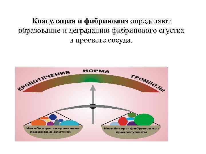 Коагуляция и фибринолиз определяют образование и деградацию фибринового сгустка