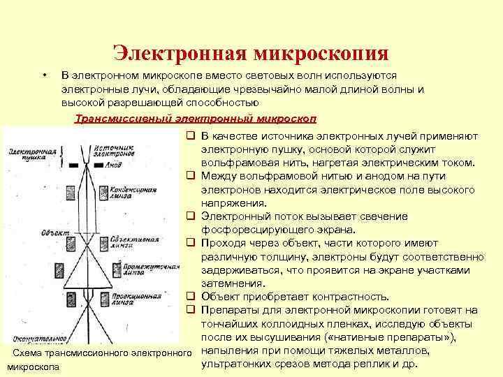 Электронная микроскопия  •  В электронном микроскопе вместо световых