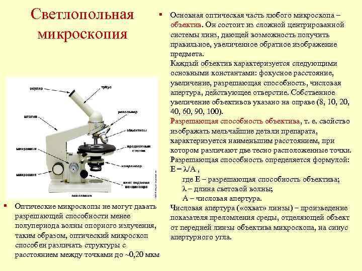 Светлопольная     § Основная оптическая часть любого микроскопа –