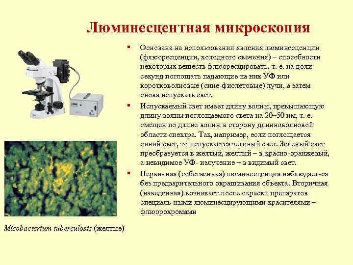 Люминесцентная микроскопия    §  Основана на использовании