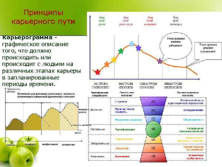 Принципы карьерного пути Карьерограмма - графическое описание того, что должно происходить или происходит с