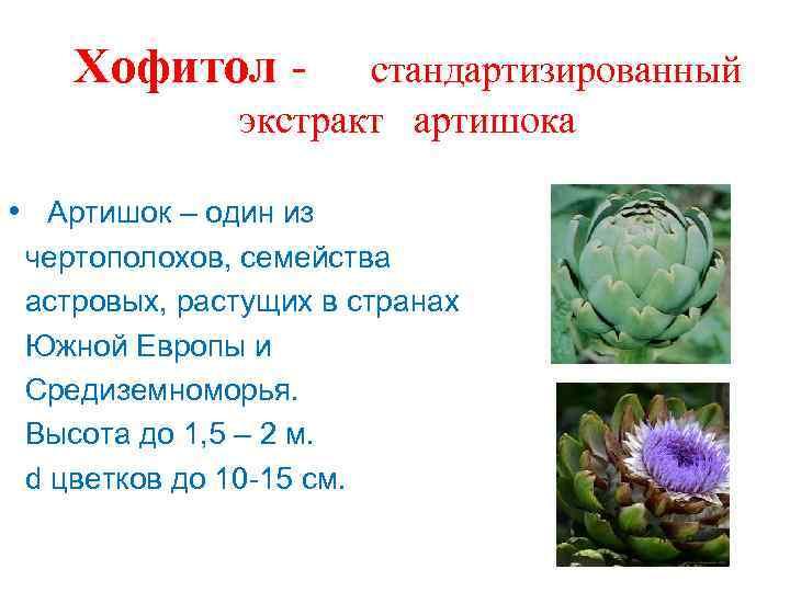 Хофитол - стандартизированный экстракт артишока • Артишок – один из чертополохов, семейства астровых, растущих