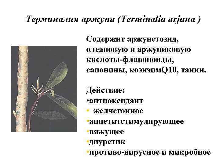 Терминалия аржуна (Terminalia arjuna ) Содержит аржунетозид, олеановую и аржуниковую кислоты-флавоноиды, сапонины, коэнзим. Q