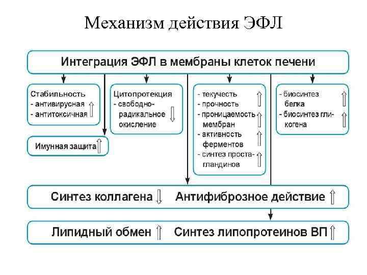 Механизм действия ЭФЛ