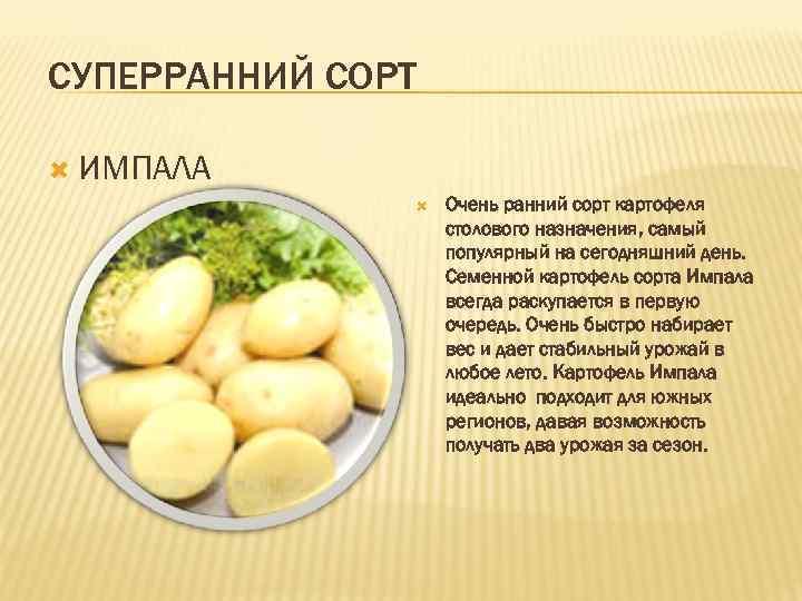 сажать картофель сорта фото таблица помещается воздушный шарик