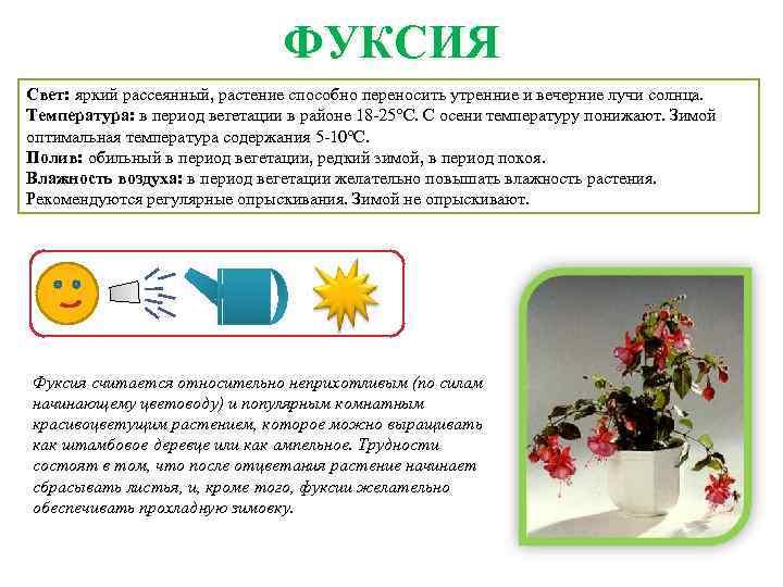 перебейте картотека комнатных растений в картинках интернете позиционирует